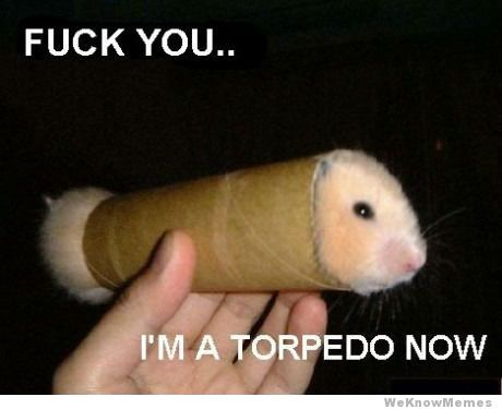 Fuck you I'm a torpedo now Hamster Memes
