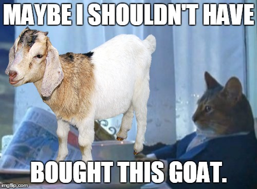 Goat Meme Maybe i shouldnt have bought this goat