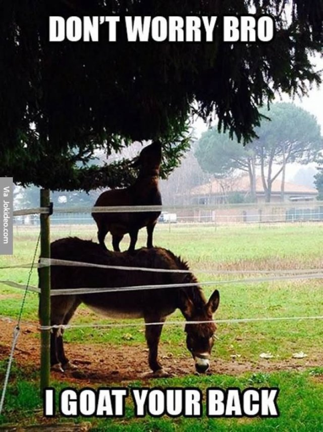 Goat Memes Don't worry bro i goat your back
