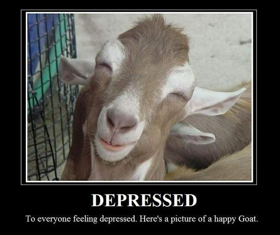 Goat Memes depressed to everyone feeling depressed