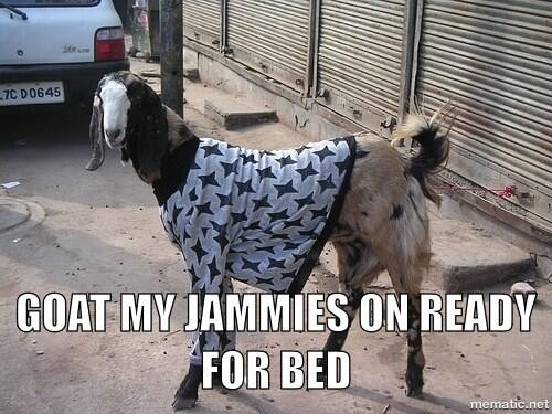 Goat my jammies on ready for bed Goat Memes