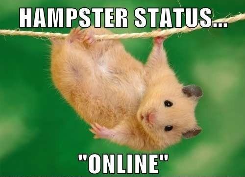 Hampster status online McDonalds Meme