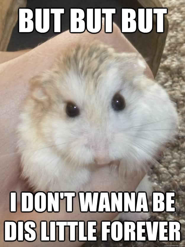 Hamster Meme But but but i don't wanna be dis