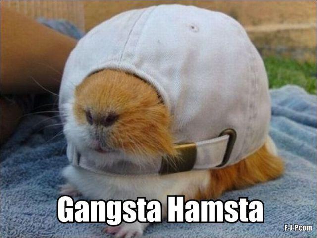 Hamster Meme Gangsta hamsta