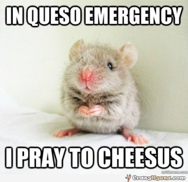 Hamster Memes In Queso emergency i pray to cheesus