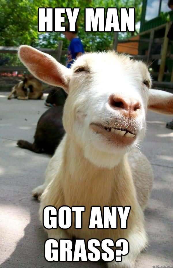 Hey amn got any Goat Memes