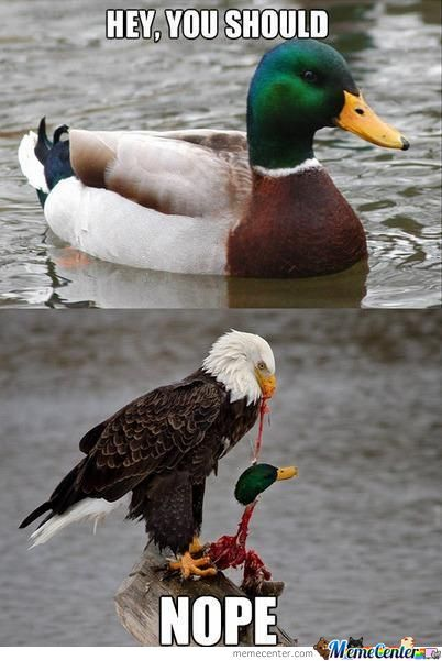 Hey you should nope Duck Meme