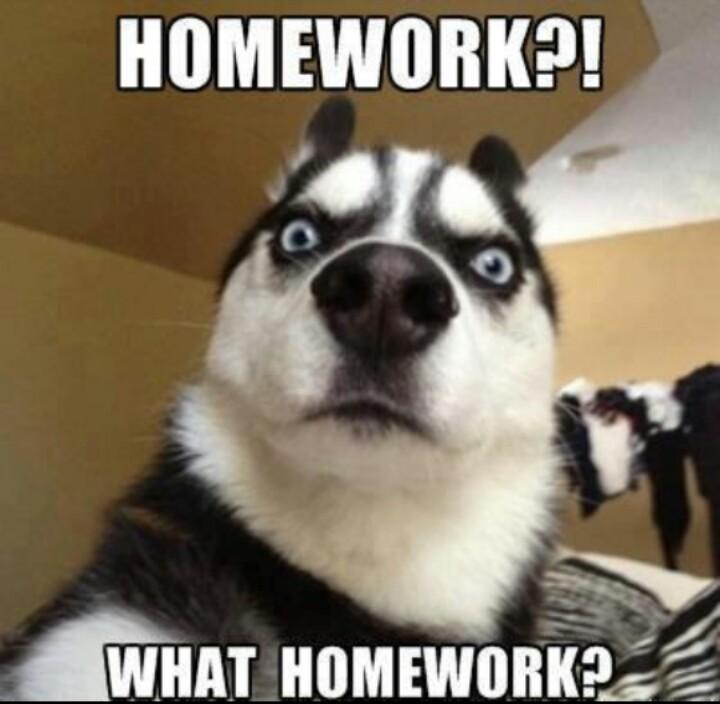 Homework Meme Homework what homework