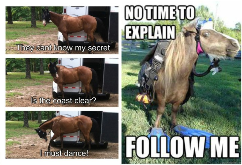 Horse Memes They can't know my secret no time to explain