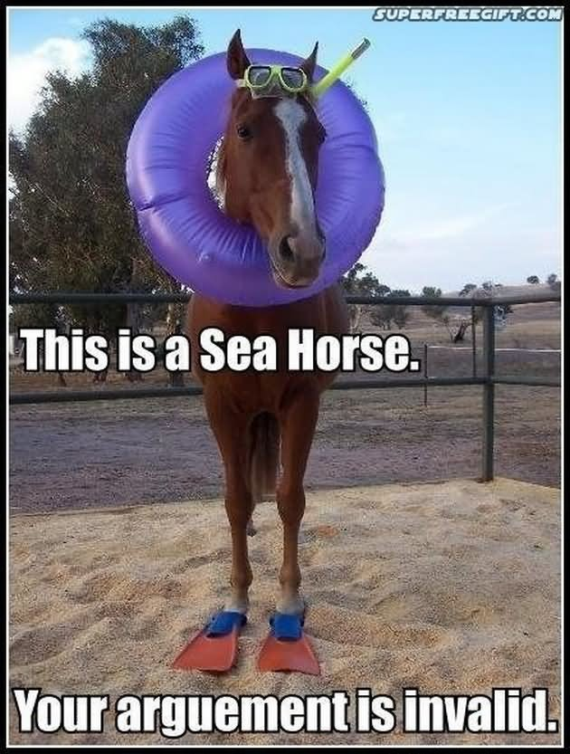 Horse Memes This is a sea horse your argument is invalid
