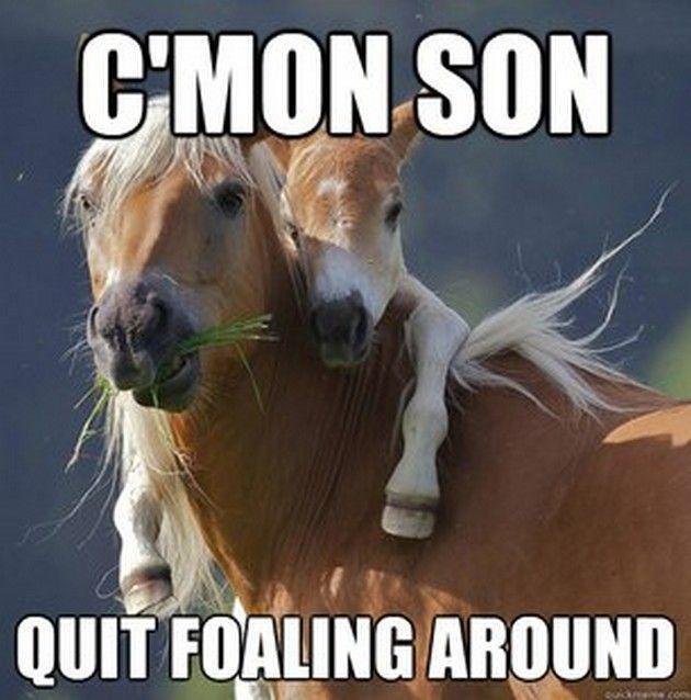 Horse Memes c 'mon son quit foaling around