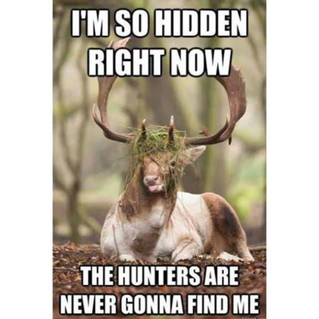 Hunting Meme I'm so hidden right now