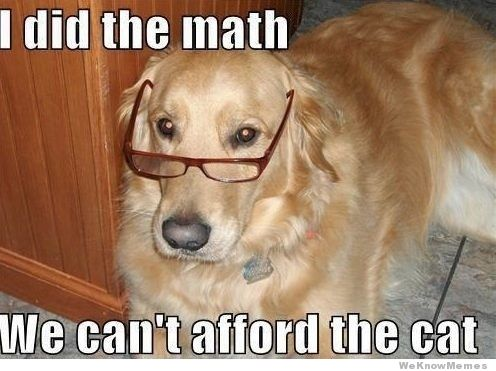 I did the math we cant afford the cat Dog Meme