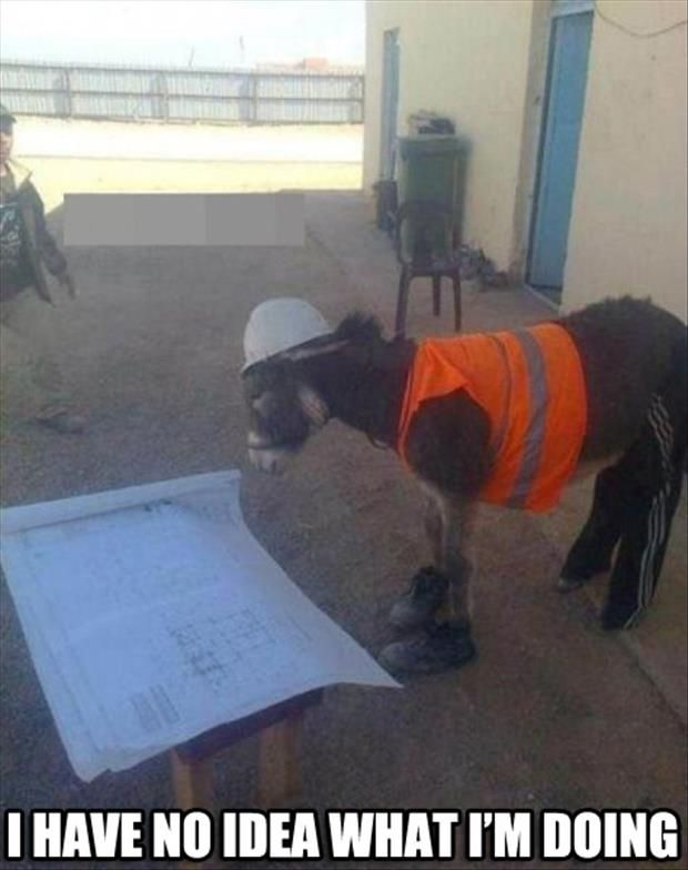 I have no idea what i m doing Donkey Meme
