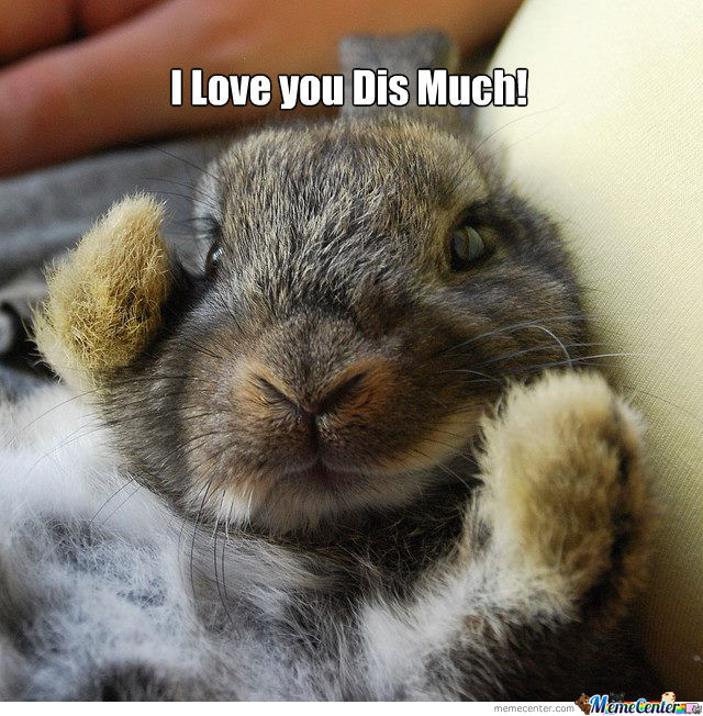 I love you dis much Bunnies Memes