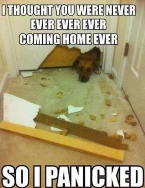 I thought you were never ever ever ever Dog Meme