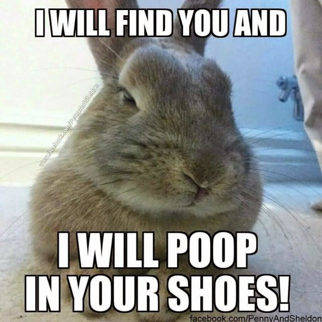 I will find you and i will poop in your shoes Bunnies Memes