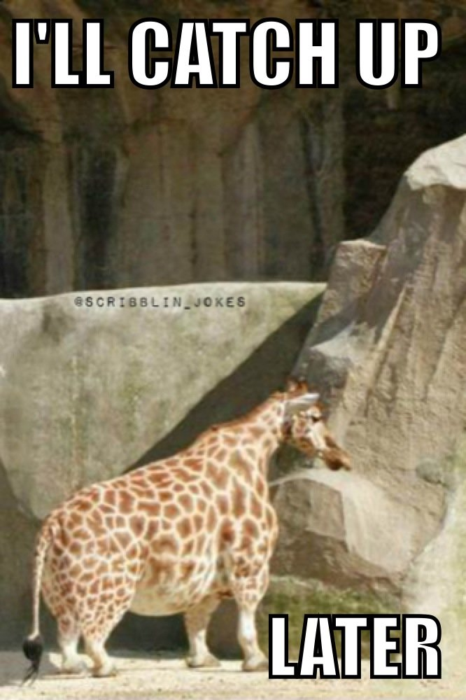 I'll catch up later Giraffe Meme