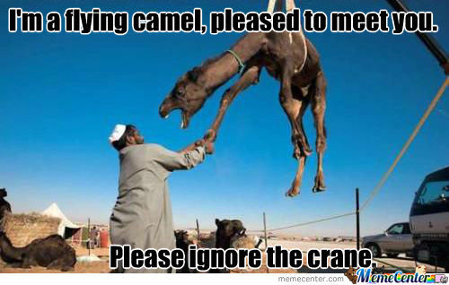 I'm a flying camel pleased to meet you Camel Meme