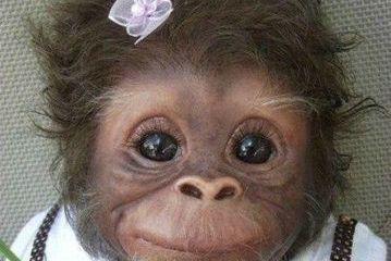 Im going to kill everything you love Monkey Meme
