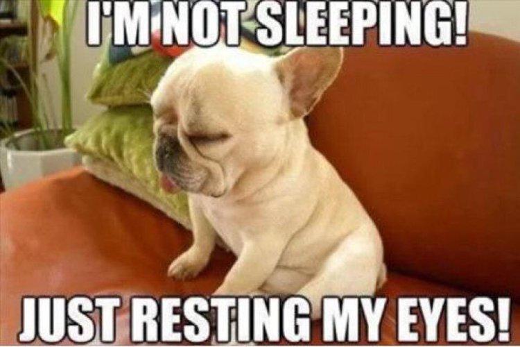 Im not sleeping just resting my eyes Food Meme