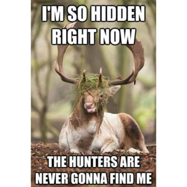 I'm so hidden the hunters are never gonna Hunting Meme