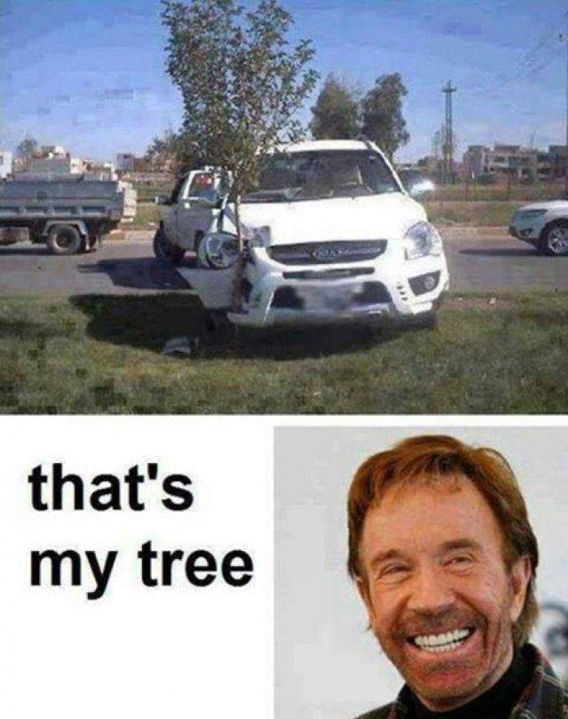 Kangaroo Memes That's my tree