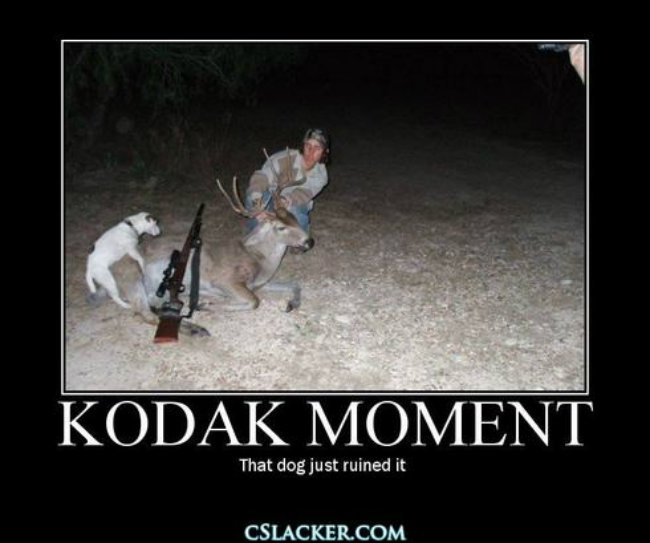 Kodak moment that dog just ruined it Hunting Meme