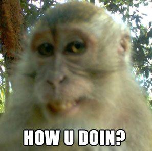 Monkey Memes How u doin