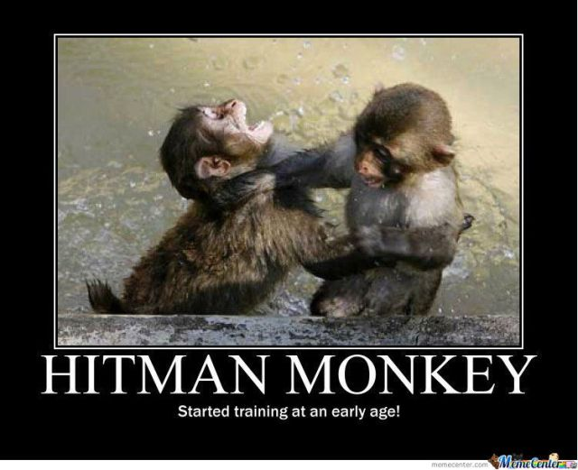 Monkey Memes Hitman monkey started training at