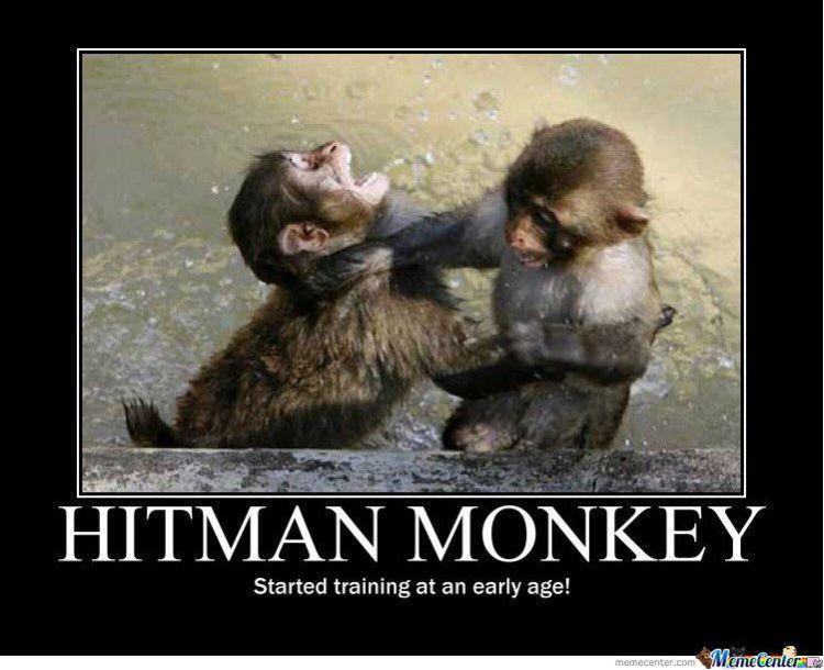 Monkey Memes Hitman monkey started training at