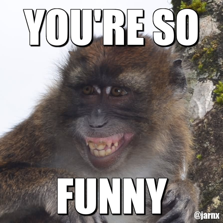 So Funny Sarcastic Meme : Monkey memes you re so funny picsmine