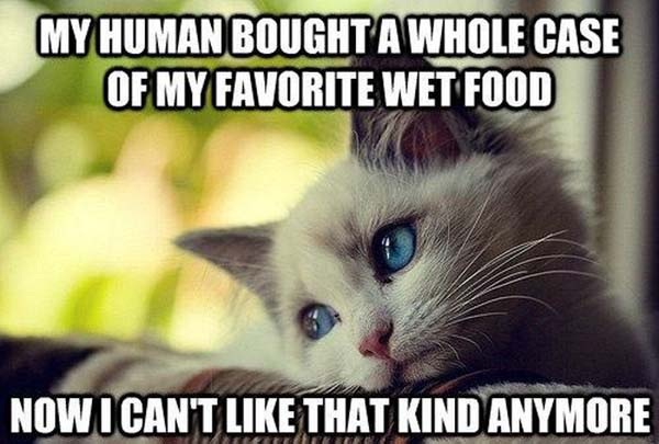 My human bought a whole case of my favorite wet food Food Meme
