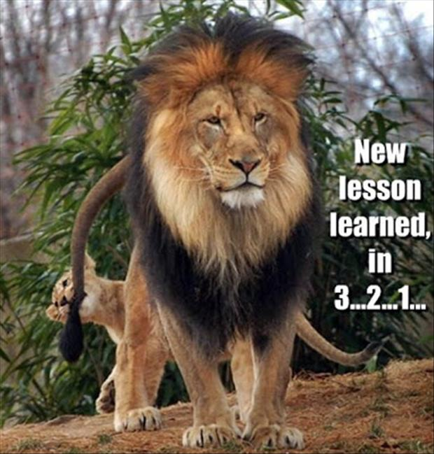 New lesson learned in 3 2 1Lion Meme