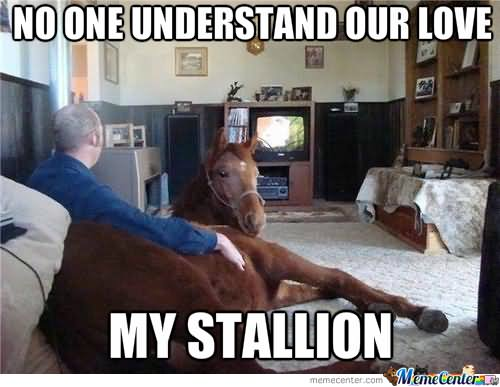 No one understand our love my stallion Horse Memes