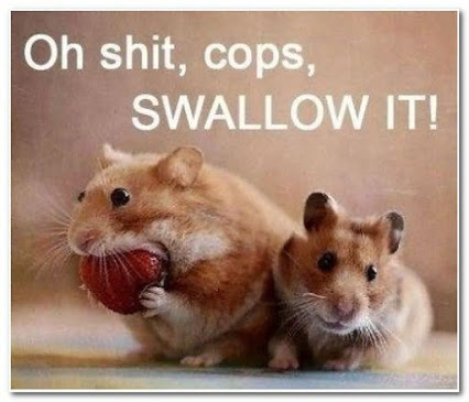 Oh shit cops swallow it Hamster Memes