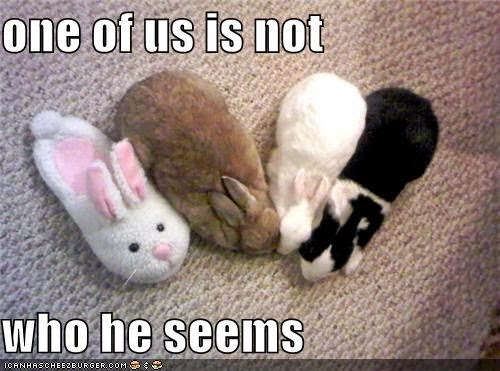 One of us is not who he seems Bunnies Meme