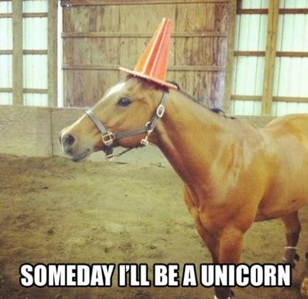Someday i'll be a unicorn Horse Meme