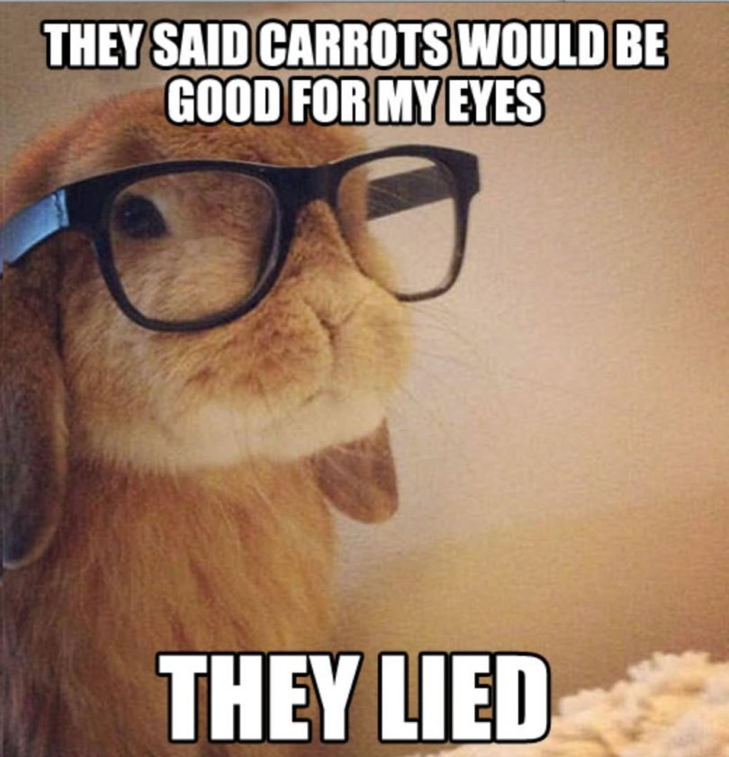 They said carrots would be good for my eyes Bunnies Meme