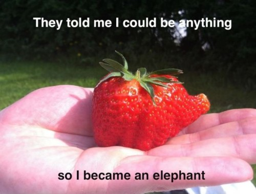 They told me i could be anything so Elephant Meme