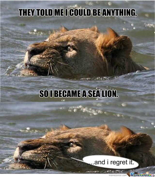 They told me i could be anything so i became a sea lion Memes
