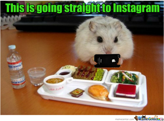 This is going straight to instagram Hamster Memes