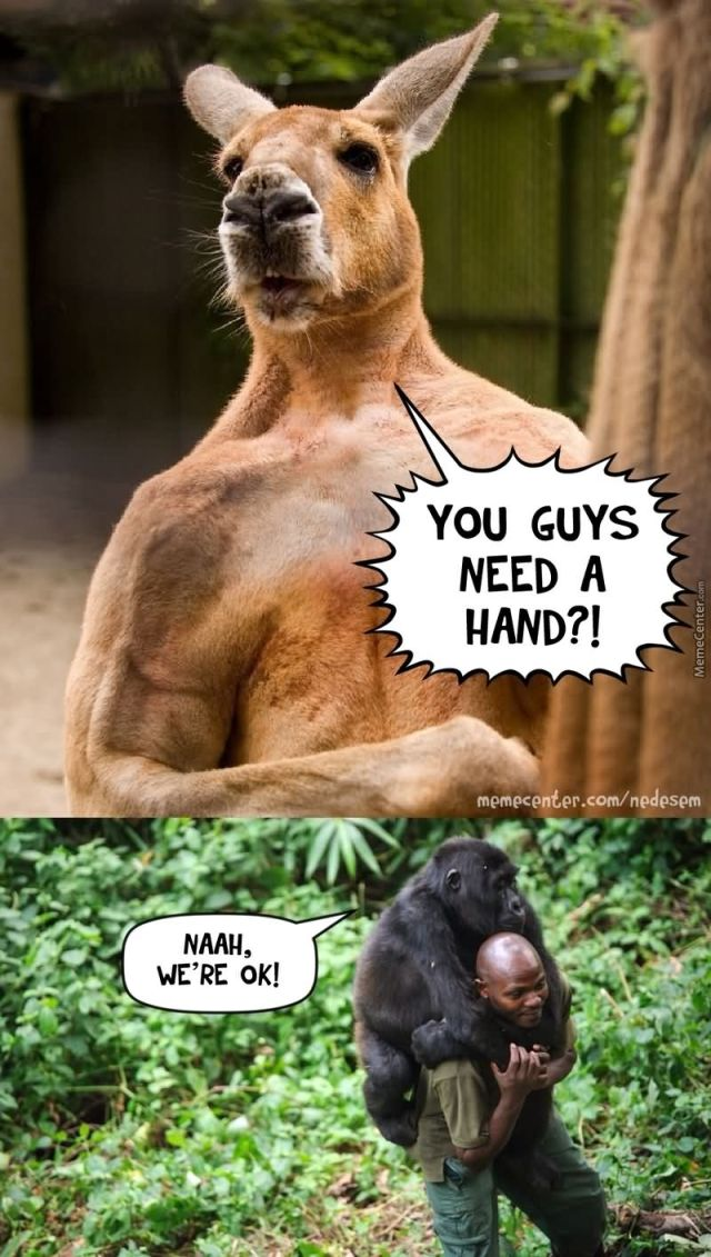 You guys need a hand Kangaroo Meme
