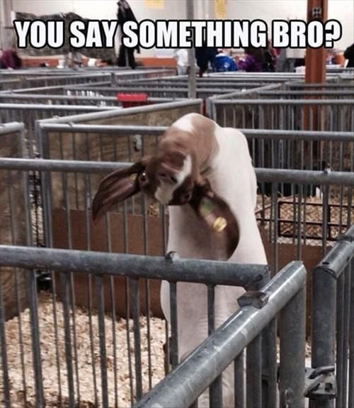 You say something bro Goat Meme
