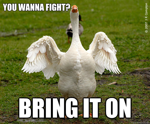 You wanna fight bring it on Fight Meme
