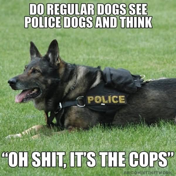do regular dogs see police dogs and think Cop Meme