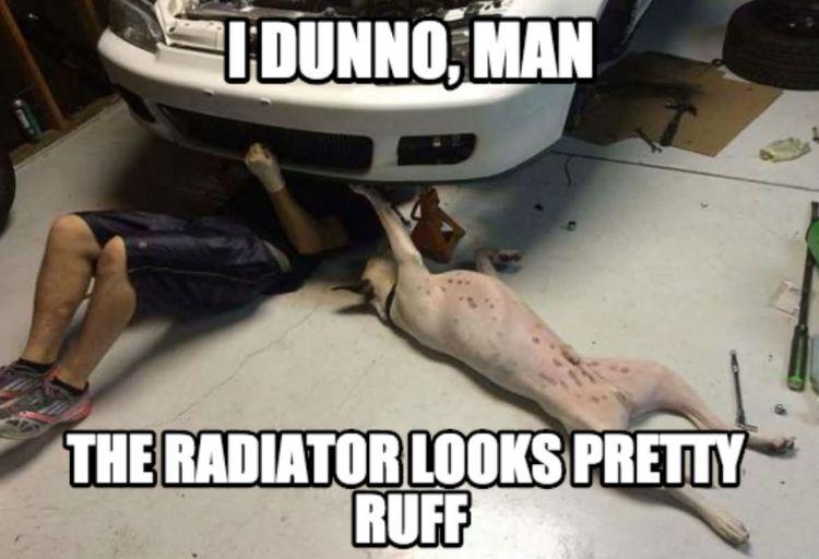 i dunno man the radiator looks pretty ruff Car Memes