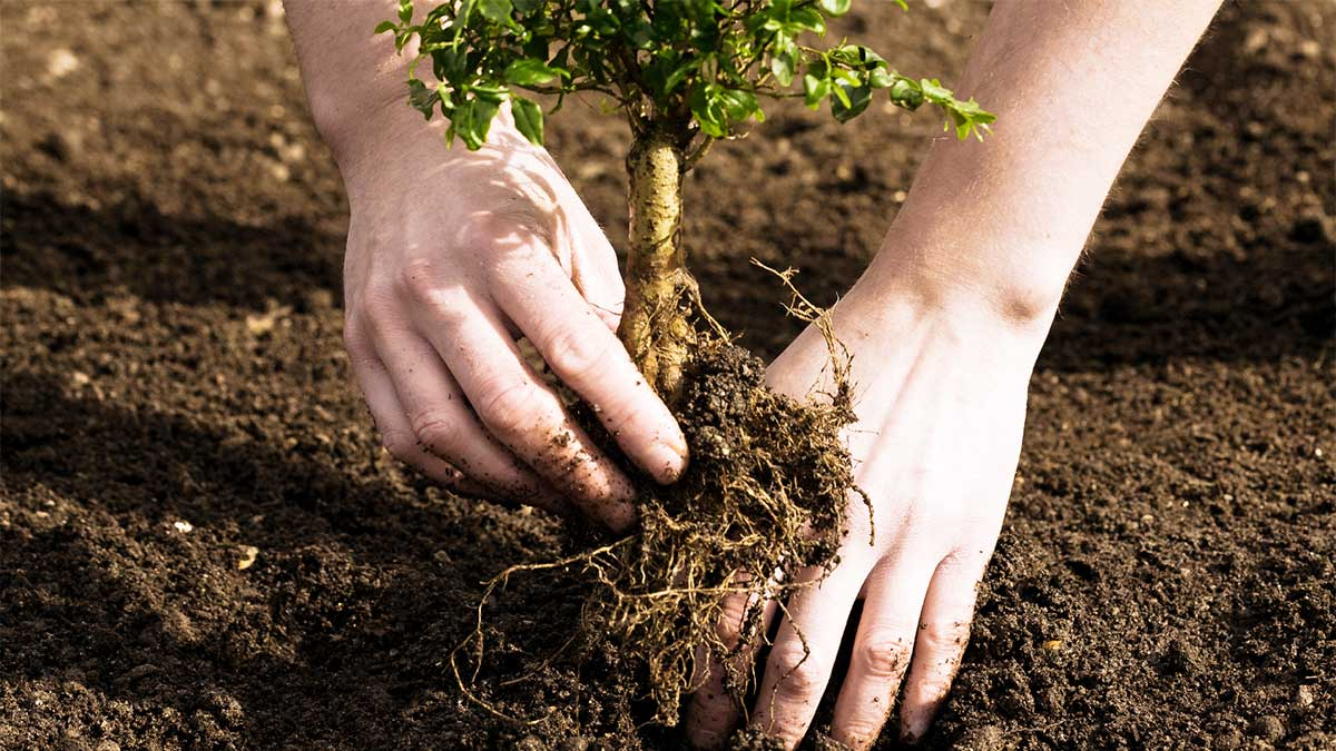 Arbor Day Planting Tree Wallpaper