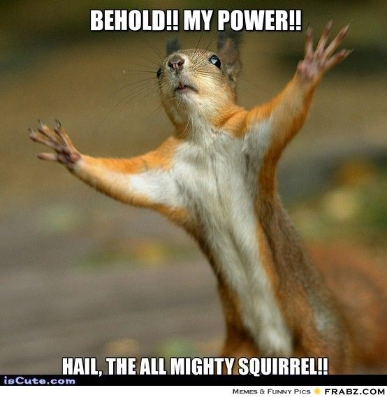 Behold my power hail the all mighty Squirrel Meme