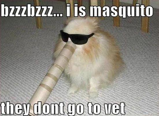 Bzzzbzzz i is masquito they don't go to vet Pet Meme